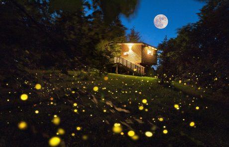Agriturismo Parco del Grep - Monferrato, Piemonte - Magiche atmosfere notturne alla casa sugli alberi La Pineta