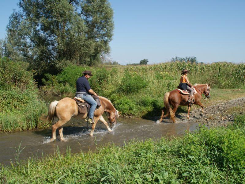 Cavalli nel Parco del Po piemontese - ph. Monica Pogliano