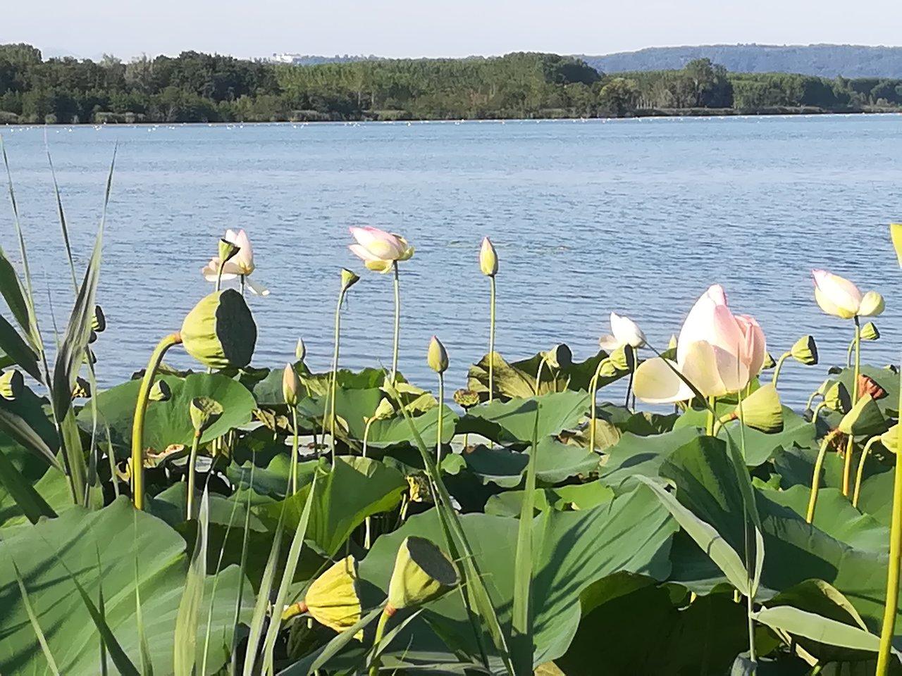 Sport e natura - Agriturismo Parco del Grep - Monferrato, Piemonte - Parco Avventura Anthares World